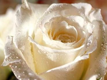 trandafiri01.jpg